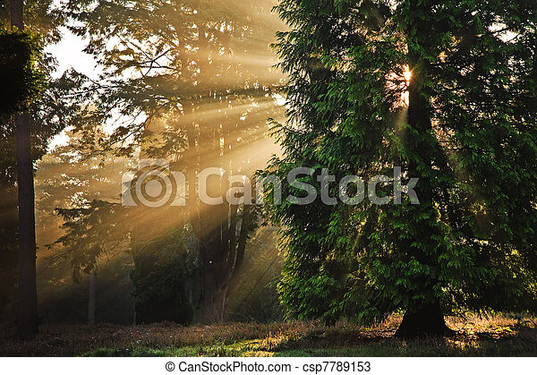 Motivational sunbeams through trees in Autumn Fall forest at sunrise - csp7789153