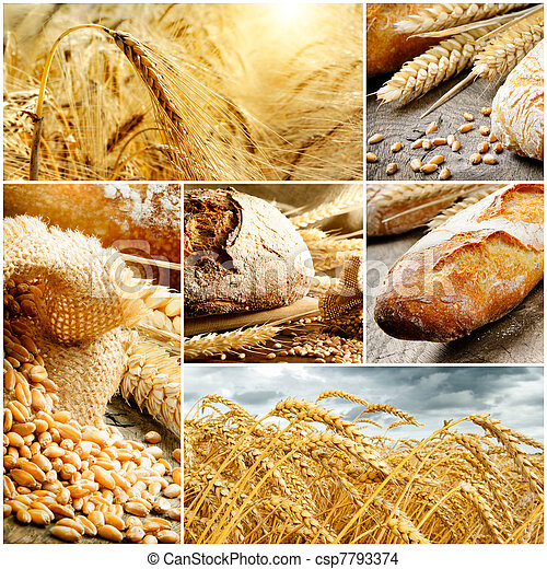 Set of traditional bread, wheat and cereal - csp7793374