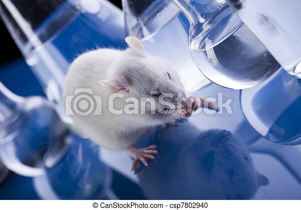 實驗室, 動物 - csp7802940