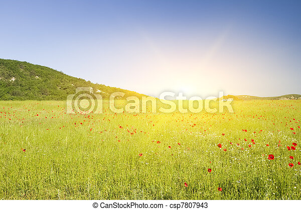 Green flower meadow on in mountains. - csp7807943