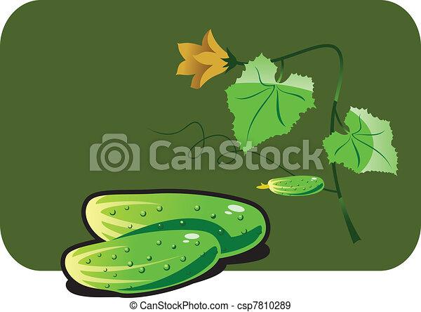cucumber - csp7810289