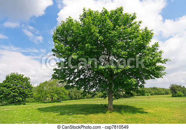 Tree in green park - csp7810549