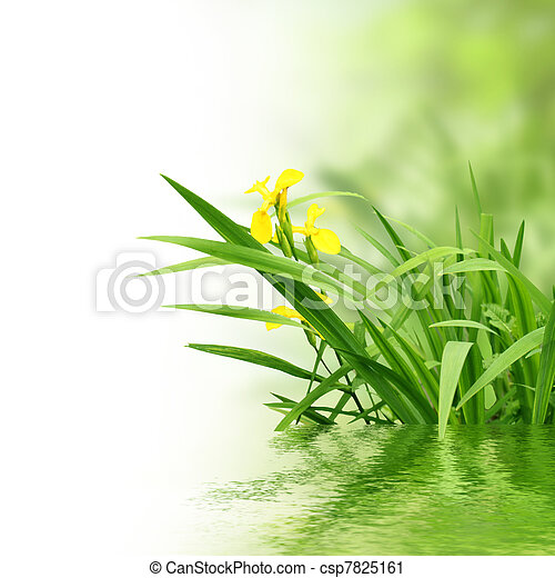 plants and water - csp7825161