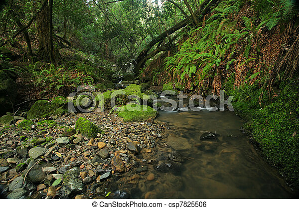 A remote prehistoric rain forest with large ferns, located in California - csp7825506