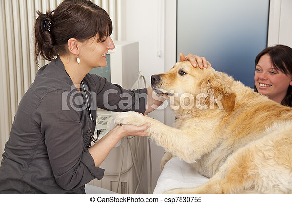 veterinarian fondling dog - csp7830755