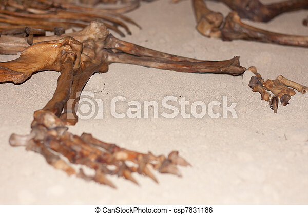 Bras, Bigfoot et squelette… Can-stock-photo_csp7831186