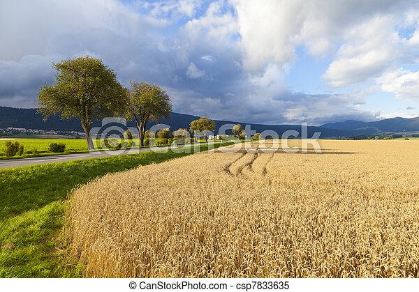 Rye Field in Neuchatel, Switzerland - csp7833635