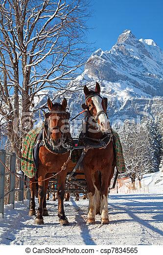 Winter in swiss alps - csp7834565