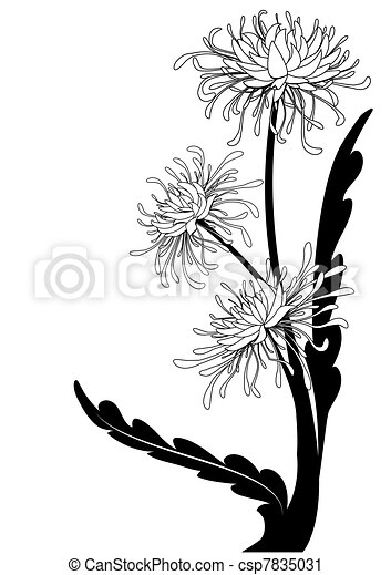 Vector Clip Art of chrysanthemum, floral background in black and ...