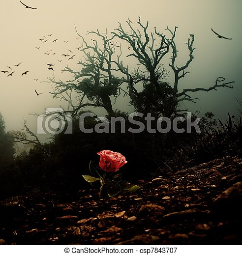 Red rose growing through soil against spooky tree - csp7843707