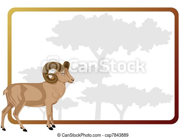 Mountain sheep - csp7843889
