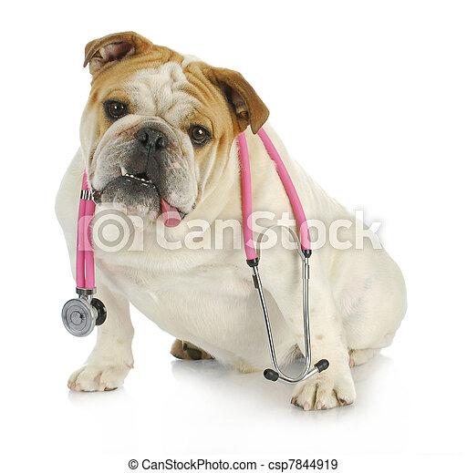veterinary care - csp7844919