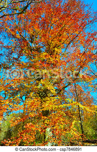 Leaf Colors Changing During Fall