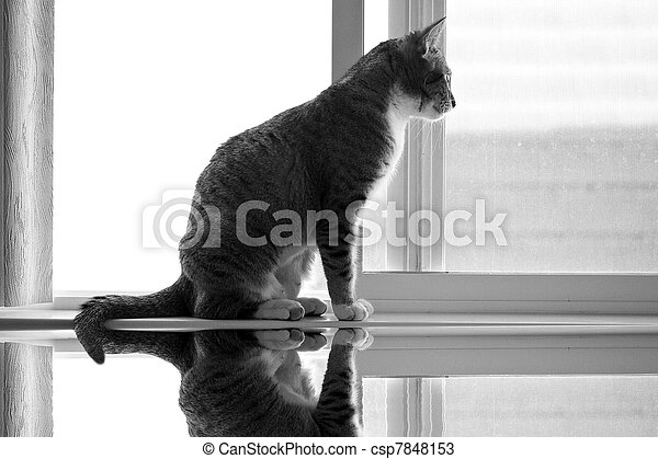 cat on window sill - csp7848153