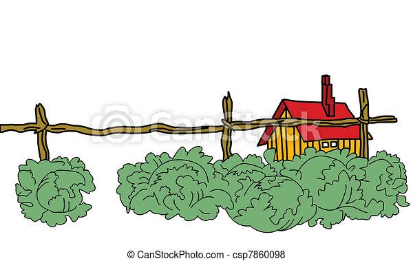 vector green cabbage near rural building - csp7860098