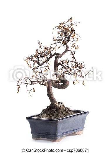 stock fotografie von verstorben bonsai baum csp7868071. Black Bedroom Furniture Sets. Home Design Ideas