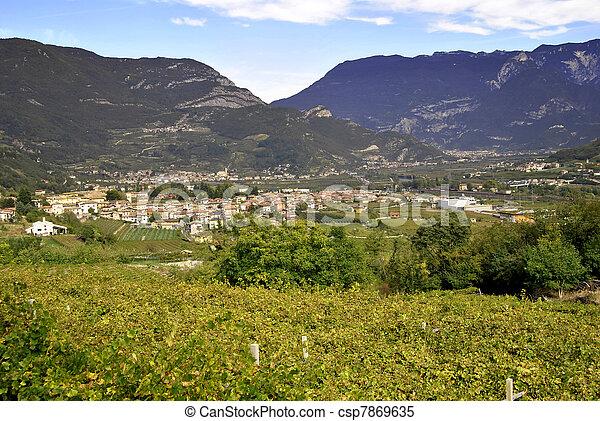 Chardonnay grapes - csp7869635