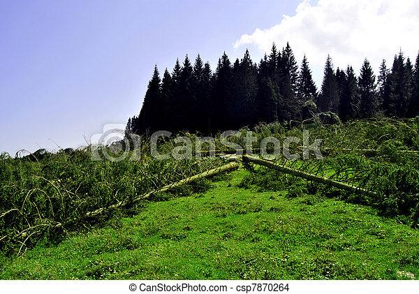 Wood Logs - csp7870264