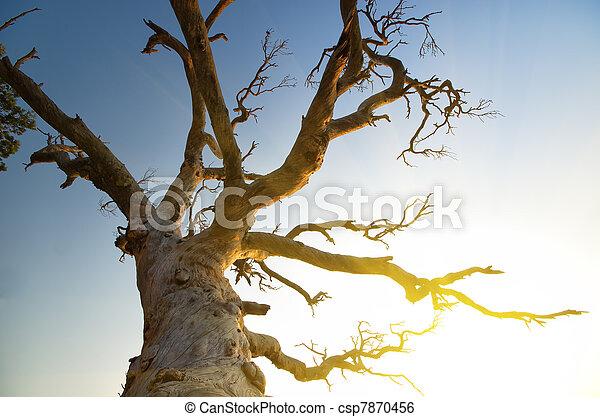 perennial tree - csp7870456