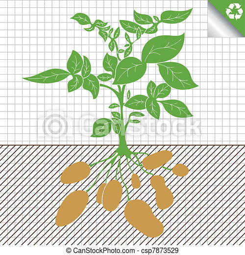 Potato plant bush vector concept - csp7873529