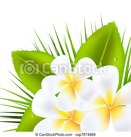 Beautiful Frangipani - csp7874669