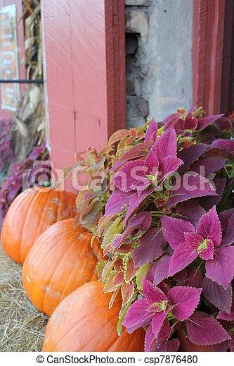 Coleus and three pumpkins - csp7876480