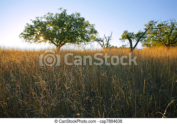 Savanna-like grassland in Northern California in late afternoon light - csp7884638