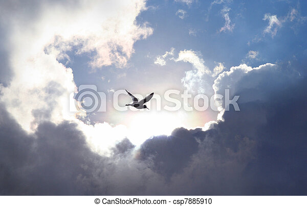 Bird flying in the sky with a dramatic cloud formation in the background. Light shining trough which gives a symbolic value of life and hope.	 - csp7885910