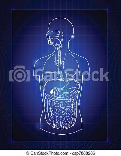 gastrointestinal system - csp7888286