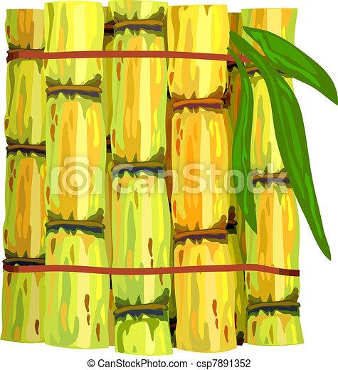 Stalks of sugar cane.  - csp7891352