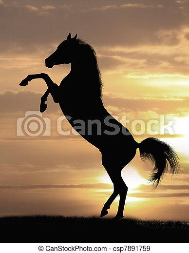 馬, 阿拉伯, 公馬 - csp7891759