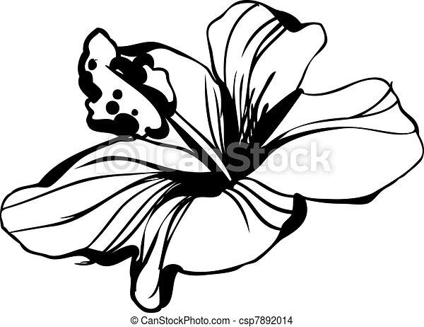 Vecteur eps de hibiscus croquis floraison fleur - Dessin bourgeon ...