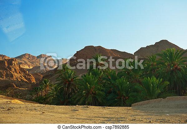 Mountain oasis Chebika - csp7892885