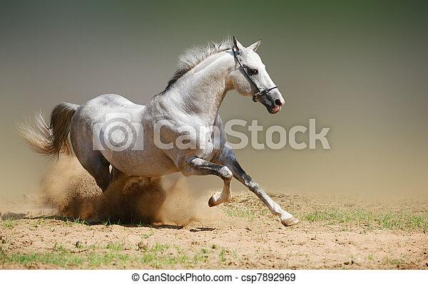 silver-white stallion in dust - csp7892969