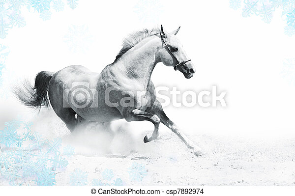 silver-white stallion - csp7892974