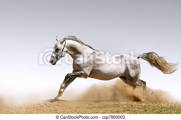 horse in dust - csp7893003