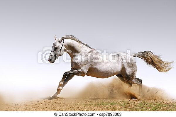 horse in dust - csp7893003