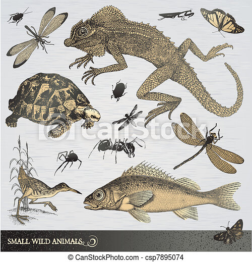 Collection of small wild animals - csp7895074