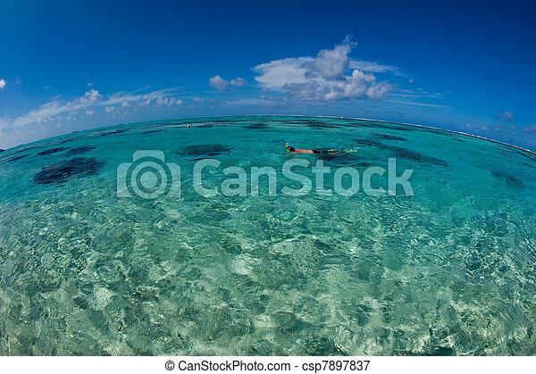 Fish-eye view - Snorkeling the ocean, Tahiti - csp7897837