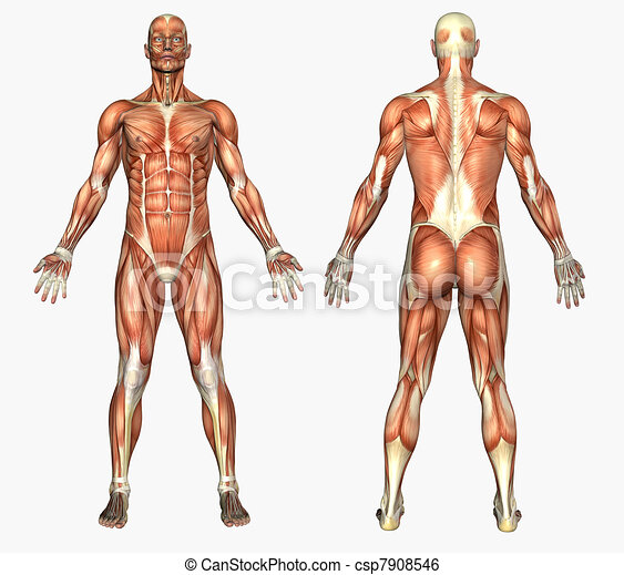 Male Muscles - csp7908546