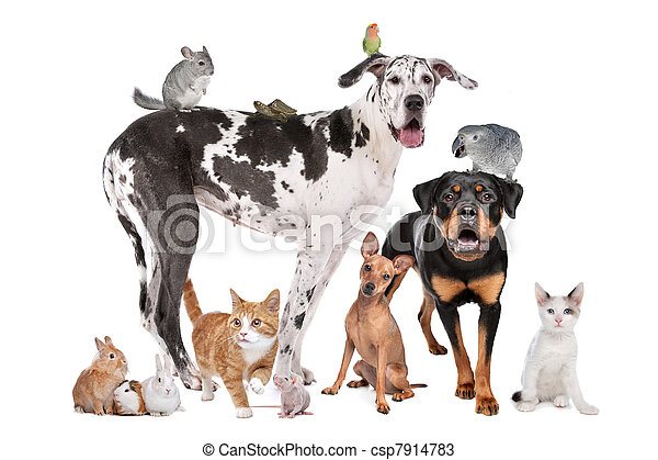 Pets in front of a white background - csp7914783