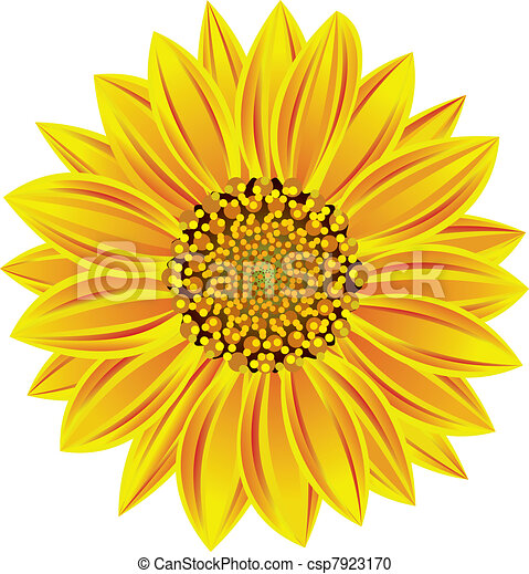 Vector Clipart of vector sunflower csp7923170 - Search ...