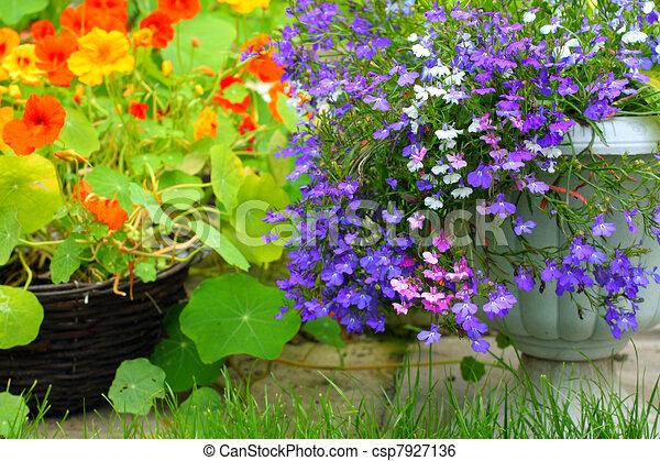 花, キンレンカ, lobelia - csp7... lobelia - キンレンカ, そして