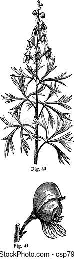 Fig. 40. Aconite. Top of the stem, Fig. 41. Aconite. Whole flower, vintage engraving. - csp7928340