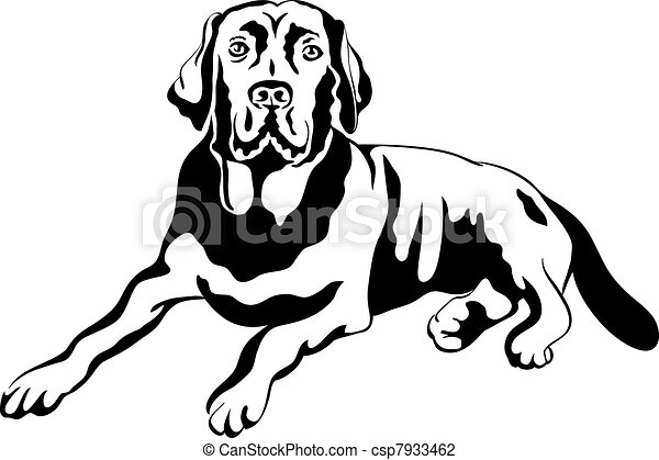 vector sketch dog breed labrador retrievers - csp7933462