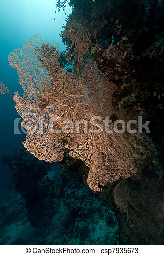 Tropical underwater life in the Red Sea. - csp7935673