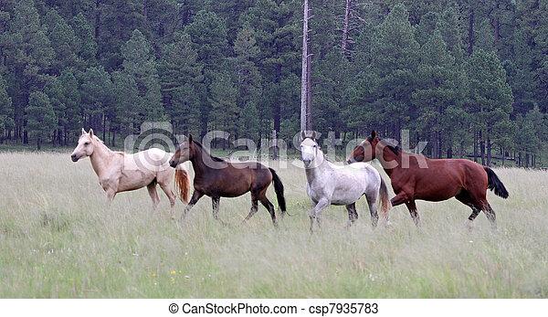 Apache Ponys, Arizona 7 - csp7935783