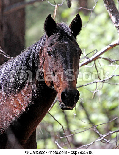 apache, poney, arizona, 4 - csp7935788