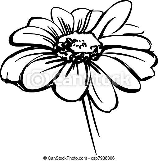 sketch wild flower resembling a daisy - csp7938306