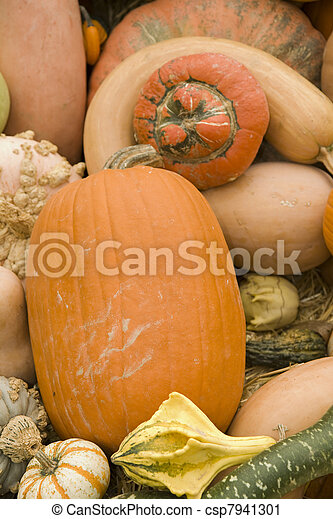 Oblong Pumpkin on Pile of Gourds - csp7941301